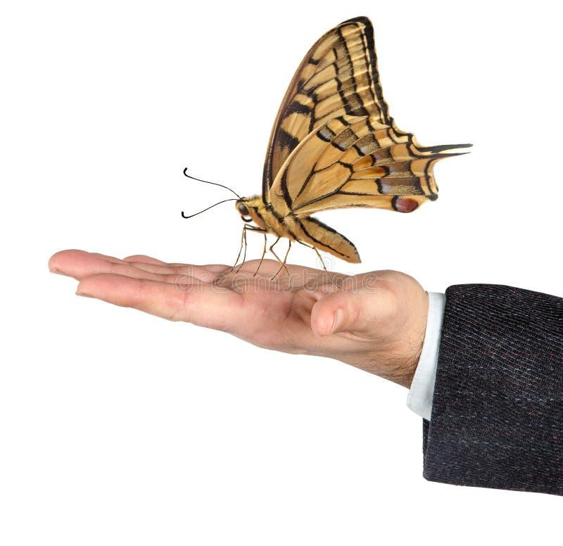 Бабочка в руках стоковые фото