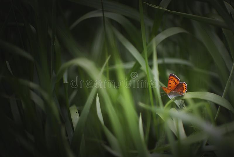 Бабочка в траве стоковая фотография