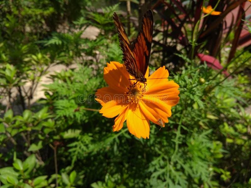 Бабочка в цветке стоковое изображение rf