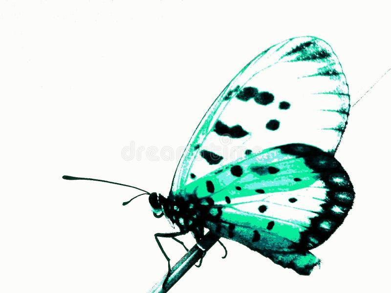Бабочка дракона стоковые изображения rf