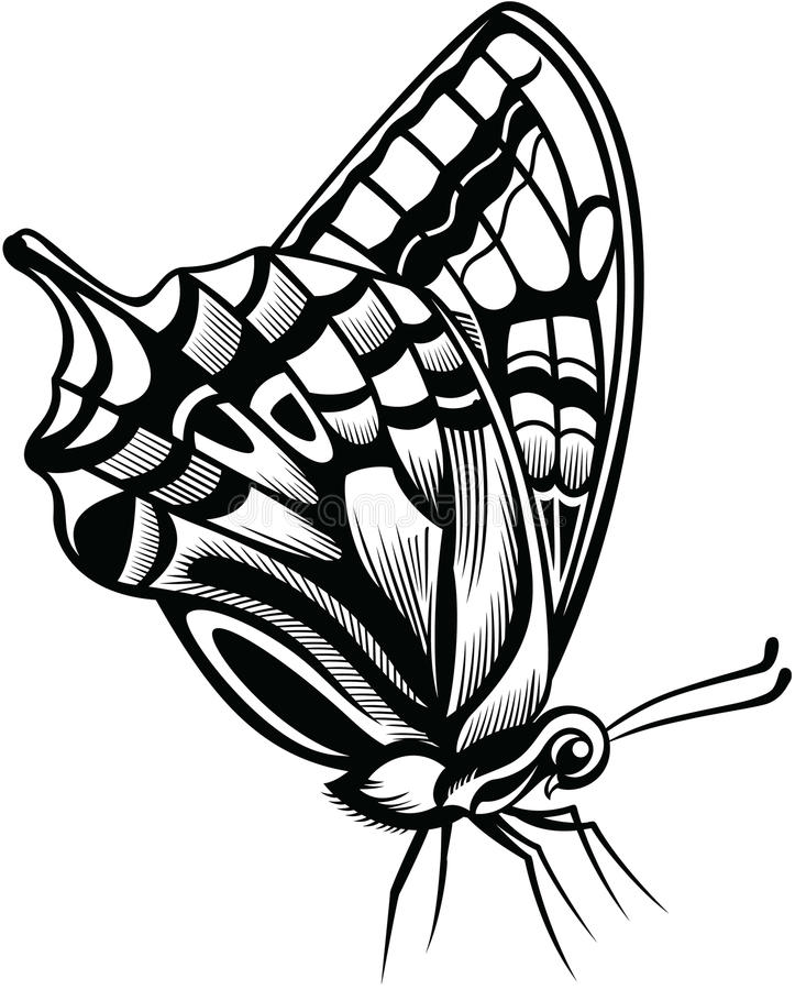 бабочка декоративная иллюстрация штока