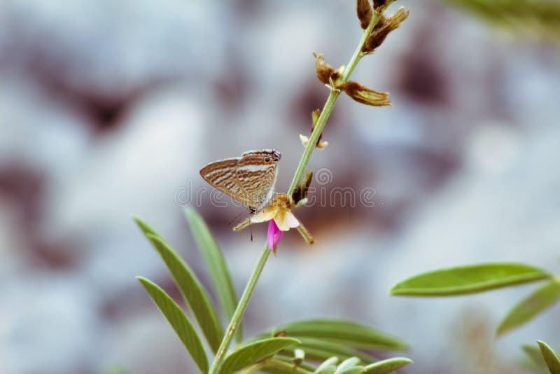 Бабочка ест от цветов в дикой природе стоковая фотография