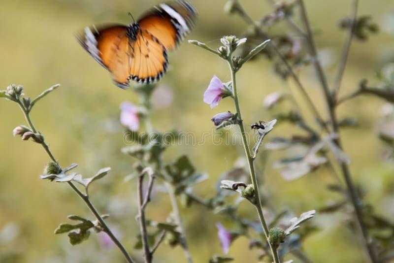 Бабочка летания стоковое изображение rf