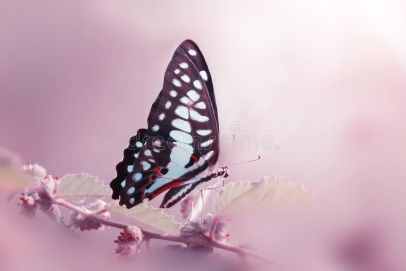 Бабочка, животные, макрос, bokeh, насекомое, природа, стоковые фото