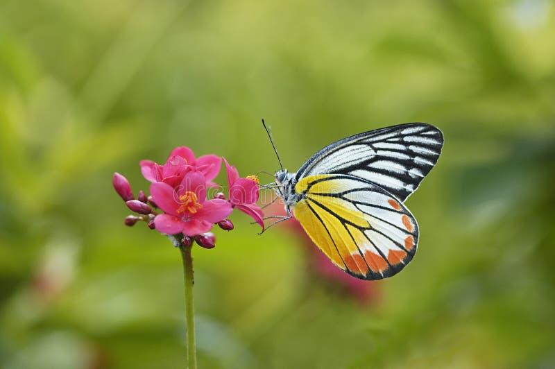 Бабочка и красный цветок стоковые фотографии rf