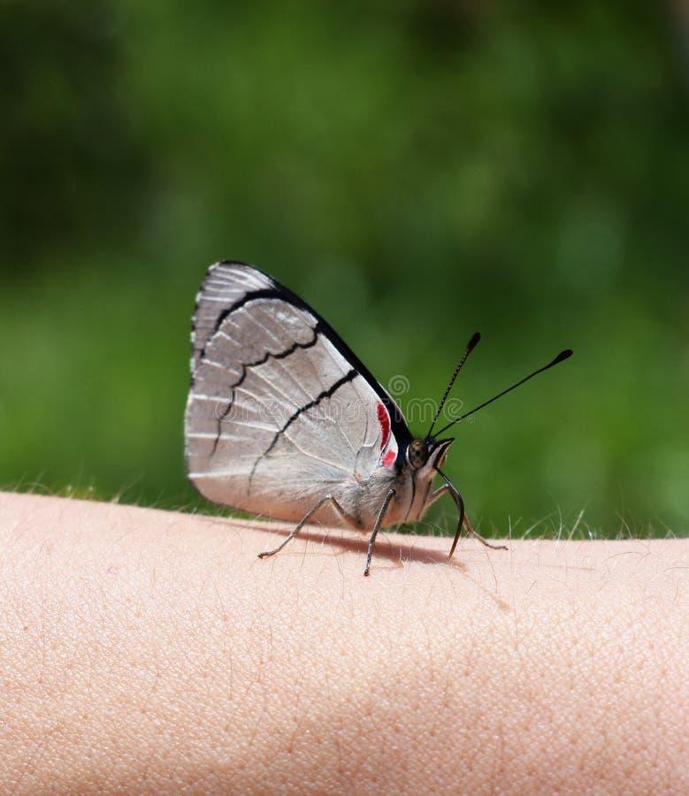 Бабочка и человек стоковое фото
