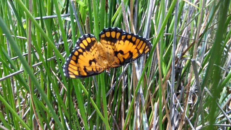 бабочка милая стоковая фотография rf