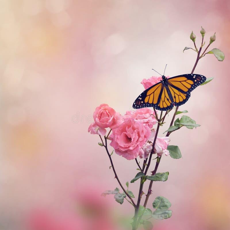 Бабочка монарха на кусте роз стоковое изображение