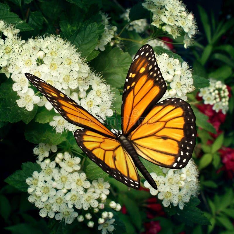 Бабочка монарха на цветках иллюстрация вектора