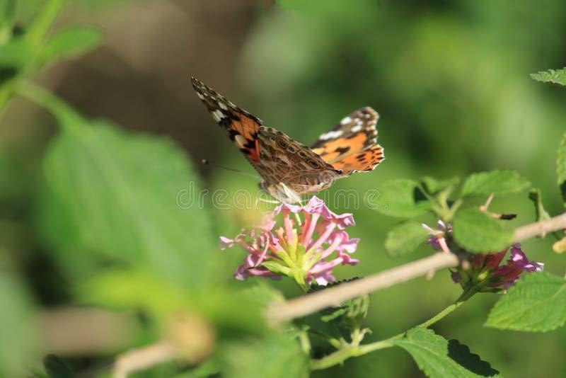 Бабочка на деле с цветком стоковые изображения rf