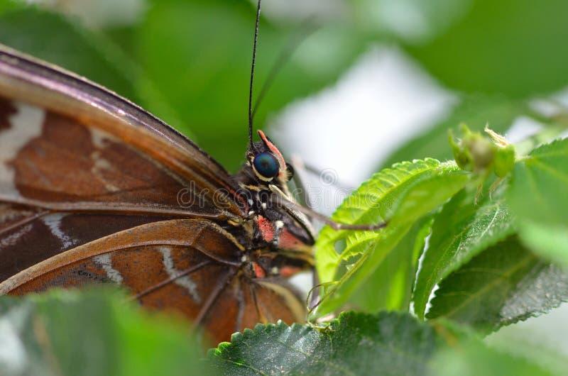 Бабочка на зеленом цвете стоковая фотография rf