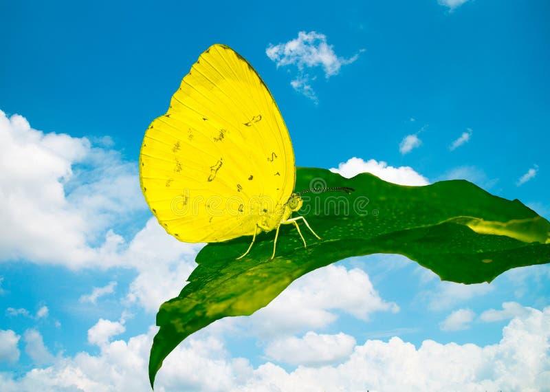 Бабочка на зеленых лист с голубым небом стоковое изображение rf