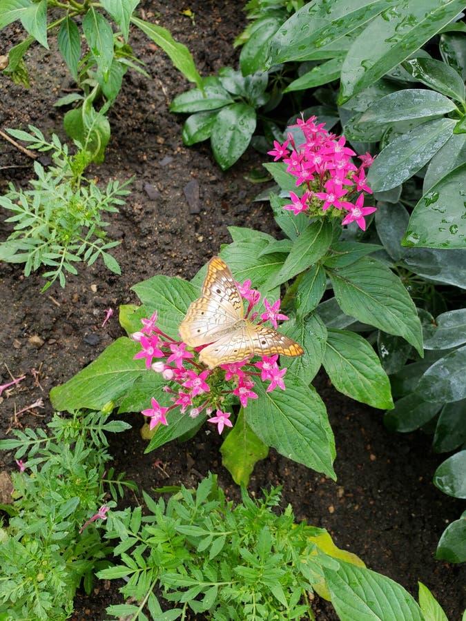 Бабочка на зоопарке стоковое фото rf