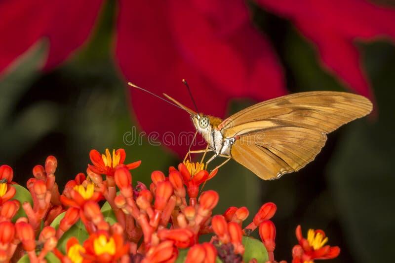 Бабочка на конце цветка вверх стоковое фото rf