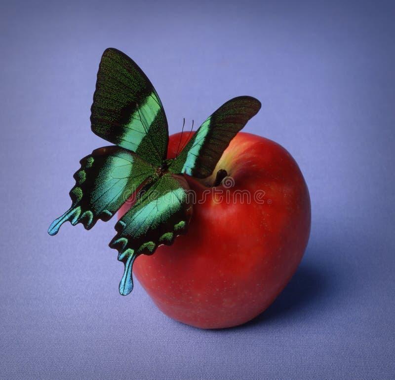 Бабочка на красном яблоке стоковые изображения