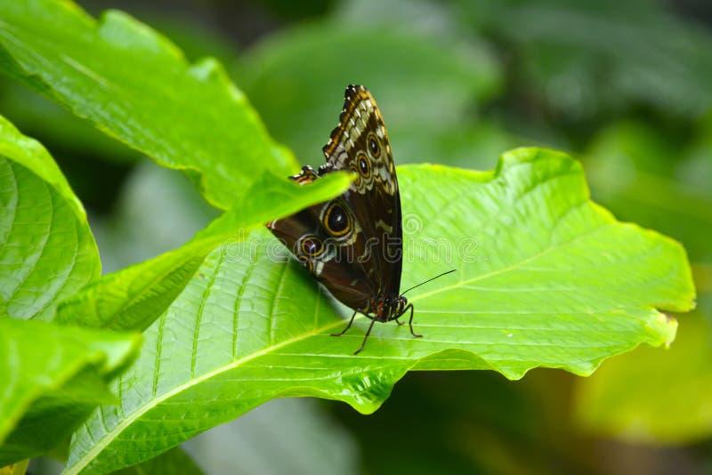 Бабочка на листьях стоковая фотография