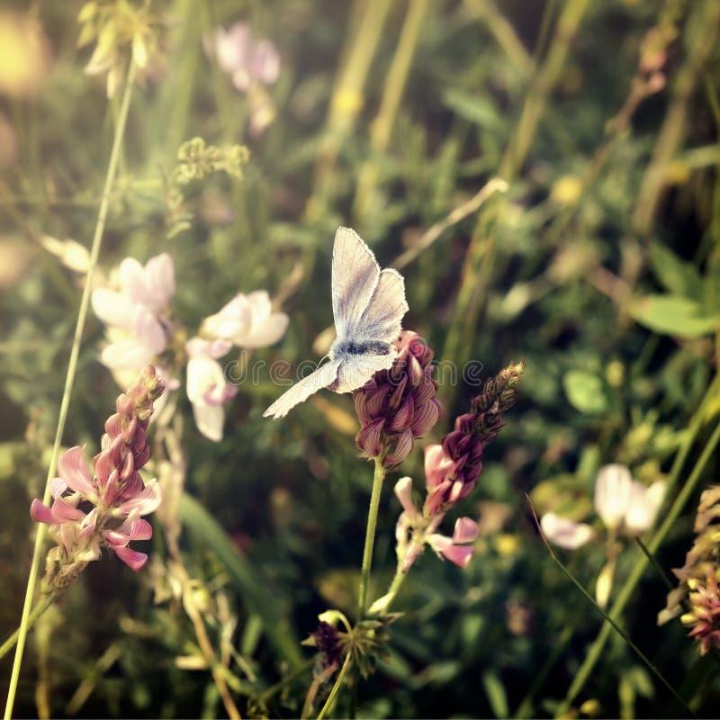 Бабочка на луге стоковое изображение rf