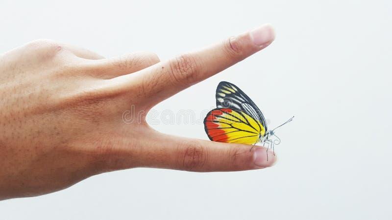 Бабочка на персте стоковое фото