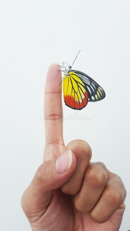 Бабочка на персте стоковые фото