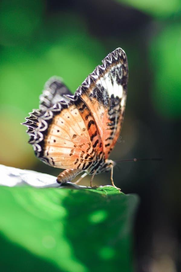 Бабочка на разрешении стоковая фотография