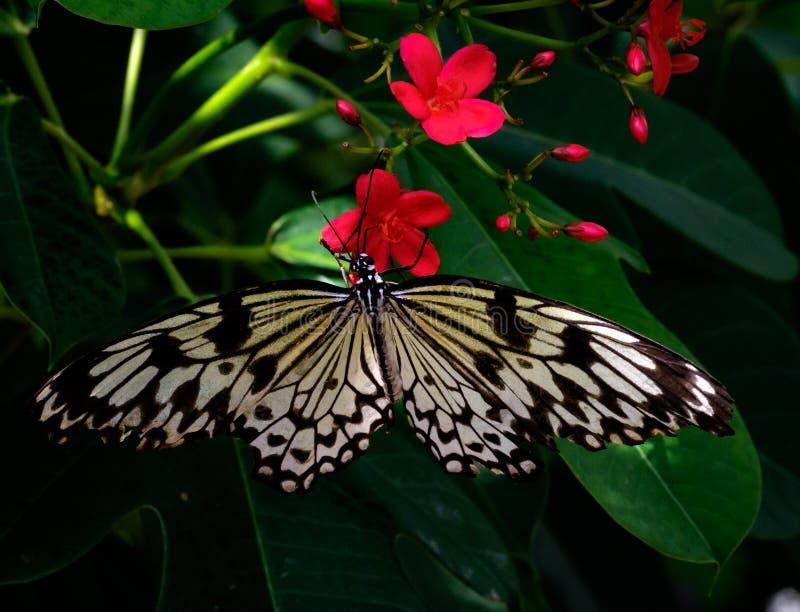 Бабочка на темноте - красные цветки стоковая фотография