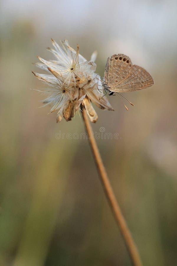 Бабочка на траве цветка стоковые фотографии rf