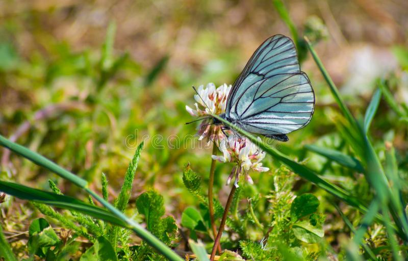 Бабочка на траве 1 стоковое фото rf
