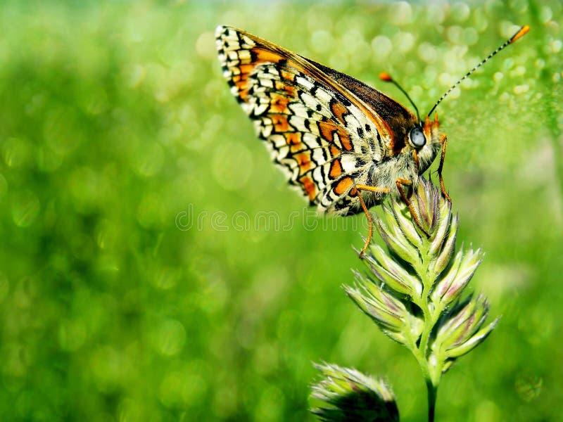 Бабочка на траве стоковое изображение rf