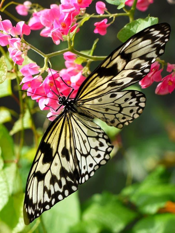 Бабочка на цветках стоковая фотография