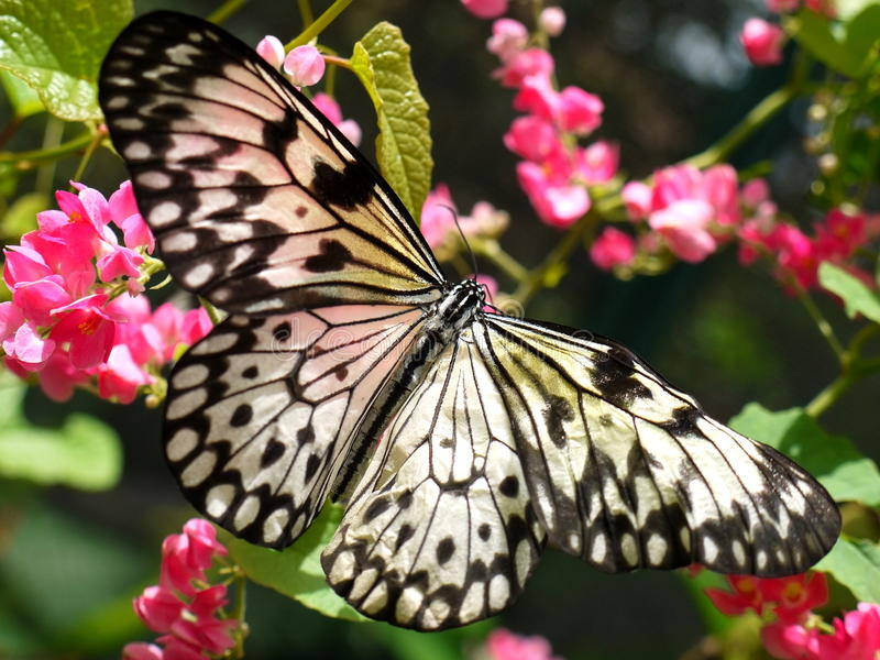 Бабочка на цветках
