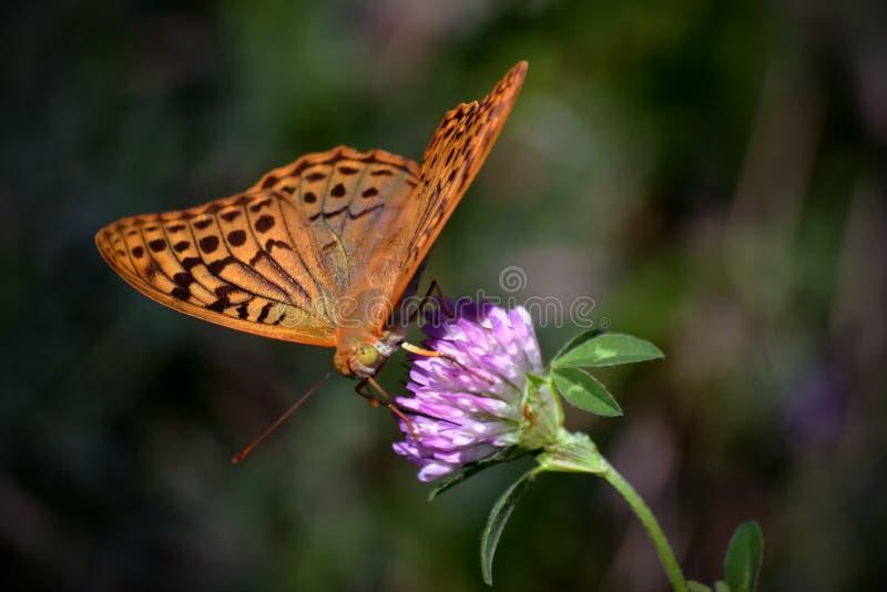 Бабочка на цветке стоковые фото