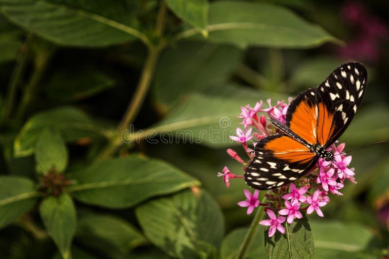 бабочка довольно стоковое фото rf