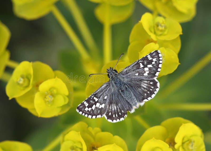 бабочка ослабляя стоковые фото