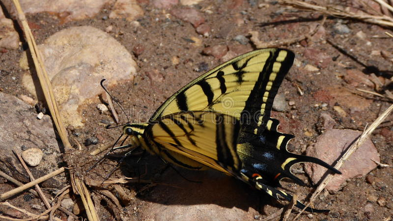 Бабочка ослабляет в пустыне стоковое фото rf