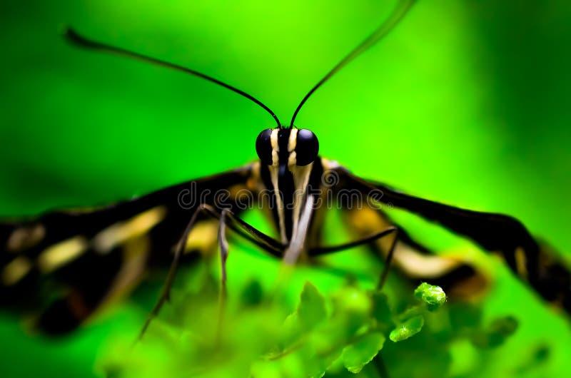Бабочка отдыхая на траве стоковое фото