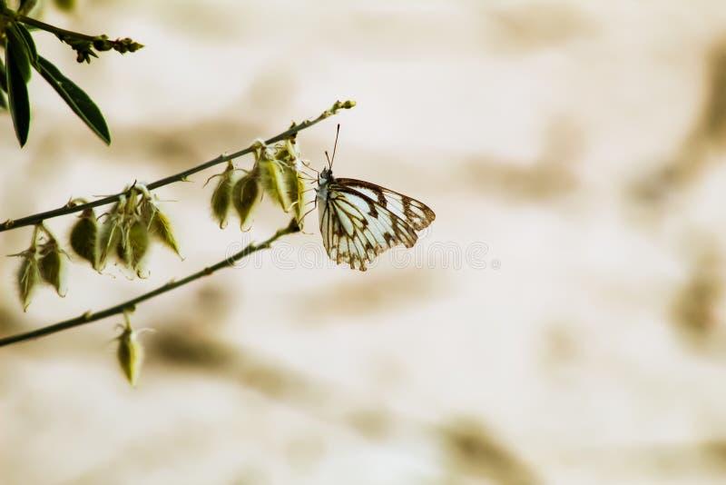 Бабочка пытается немного поесть стоковые фото