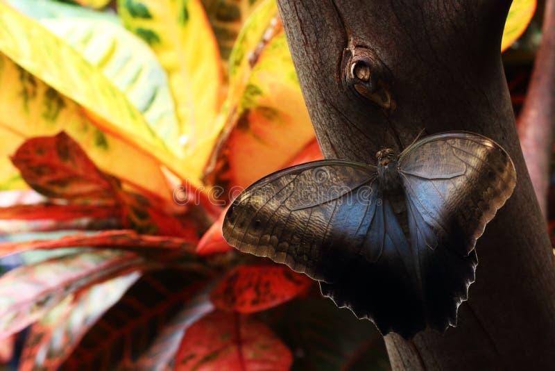 Бабочка сидя на дереве стоковые фото