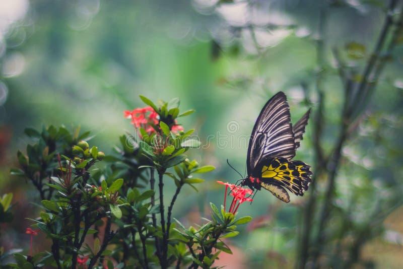 Бабочка сидя на красном цветке стоковые фото