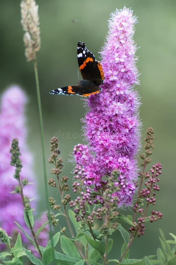 Бабочка сидя на цветке стоковое изображение