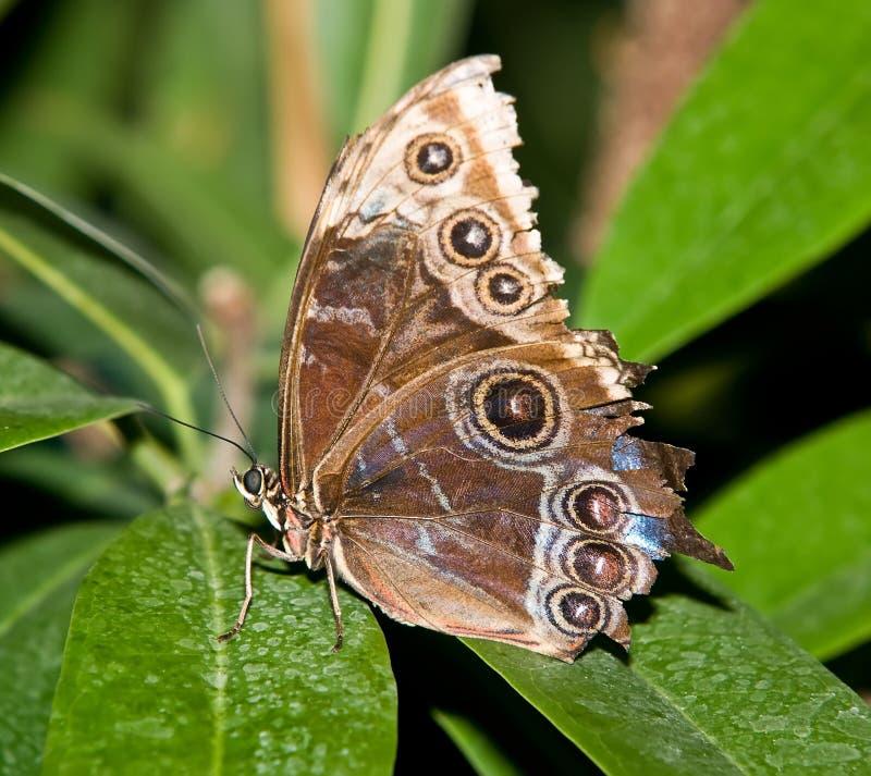бабочка тропическая стоковая фотография