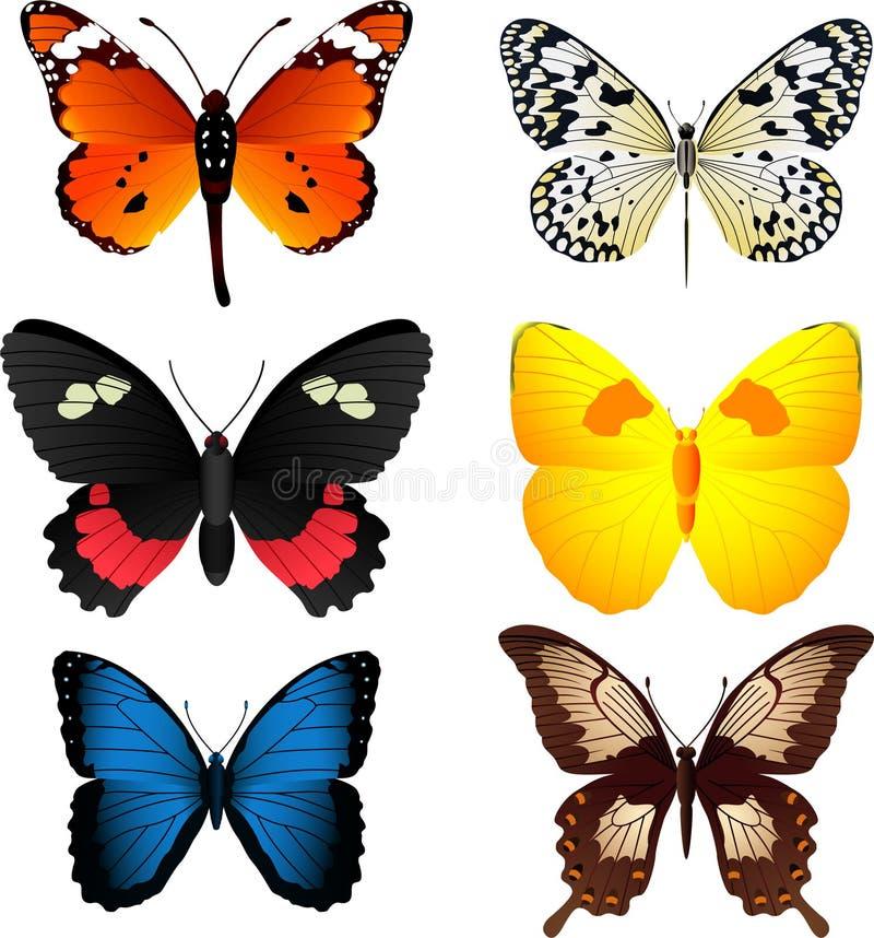 Бабочка установила 1 иллюстрация вектора