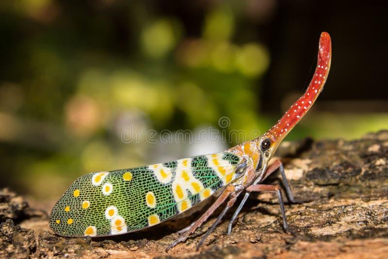 Бабочка хобота стоковые фотографии rf