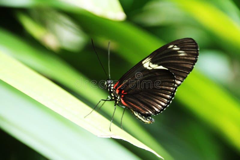 бабочка цветастая стоковое фото