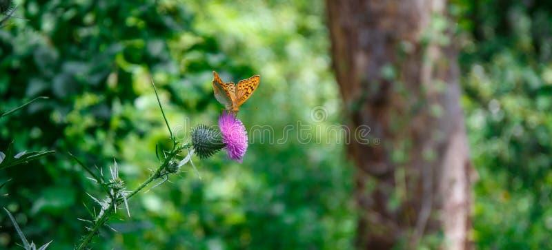 бабочка экзотическая стоковое фото