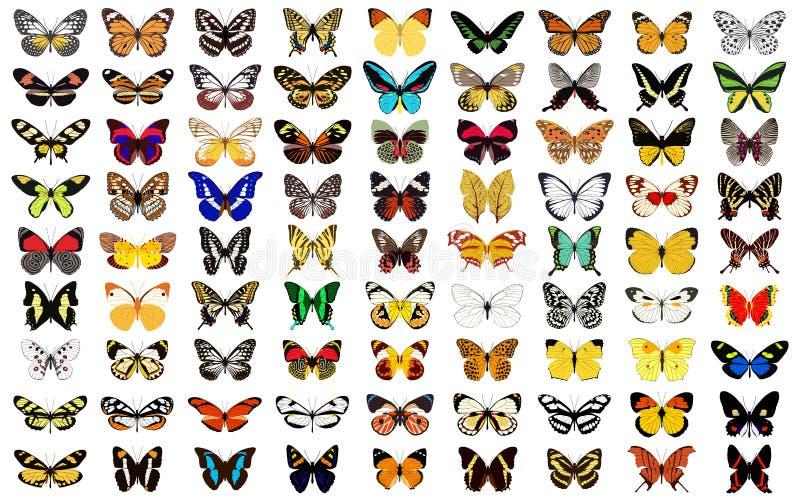 бабочка иллюстрация штока