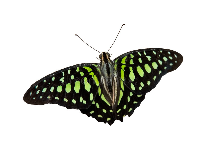 бабочка 16 стоковое фото