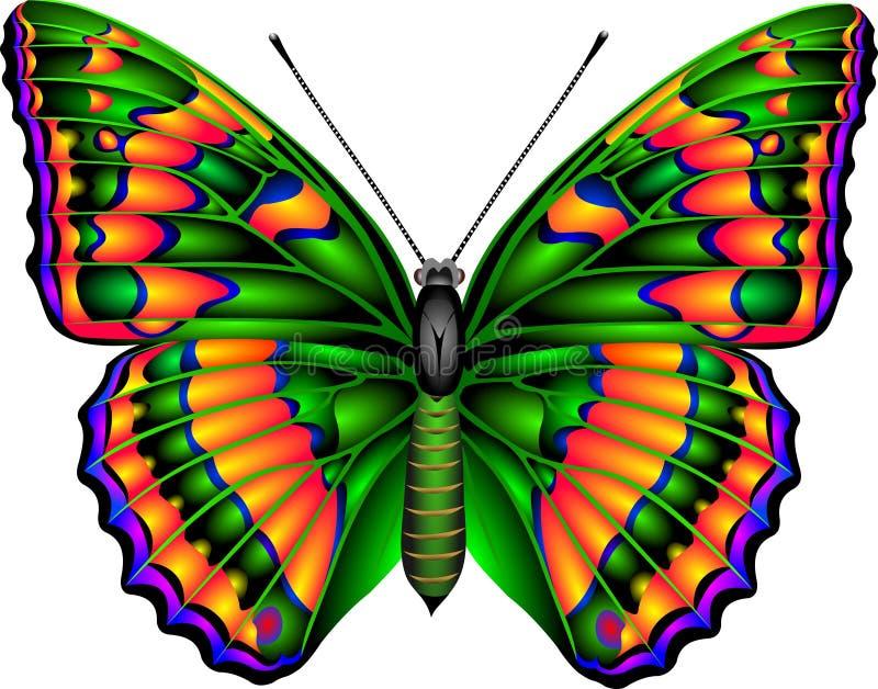 бабочка иллюстрация вектора