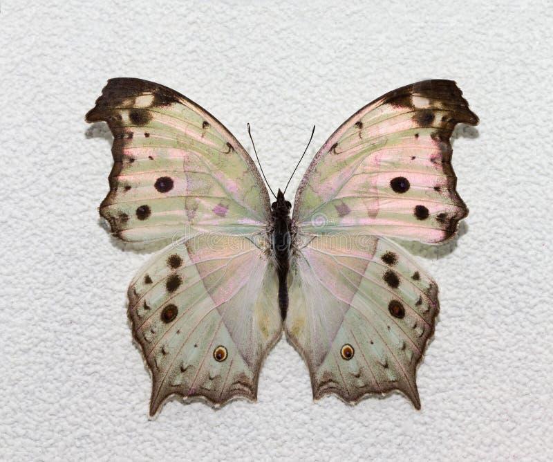 Download Бабочка стоковое фото. изображение насчитывающей яркое - 33729788