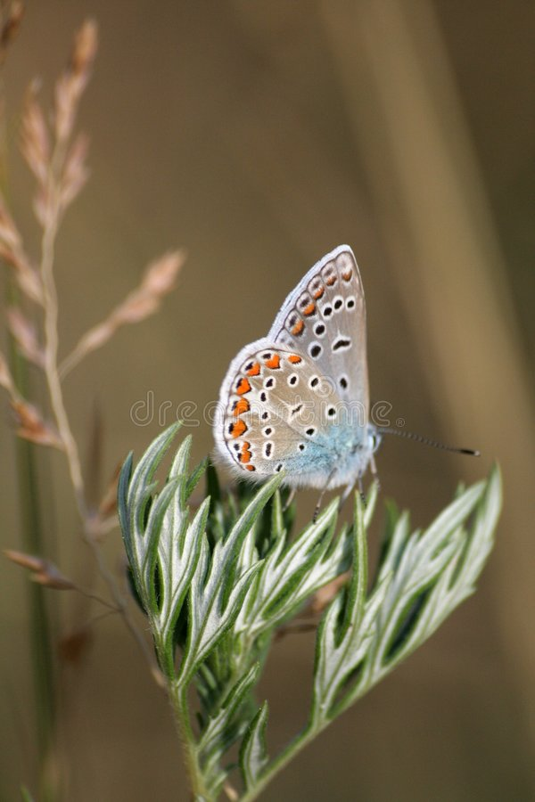 бабочка 5 стоковое фото