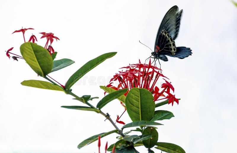 Бабочка, стоковое изображение